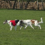 coursing qualification 2014